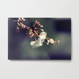 EARLY BLOOMERS LATE BLOOMERS Metal Print