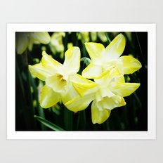 Daffodil family Art Print