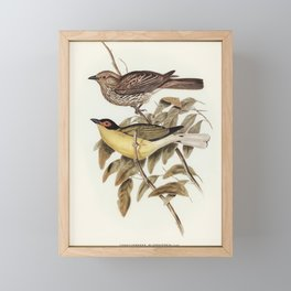 Vintage Print - John Gould - The Birds of Australia (1848) - Yellow Figbird Framed Mini Art Print