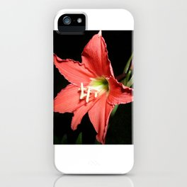 Red Lilium iPhone Case