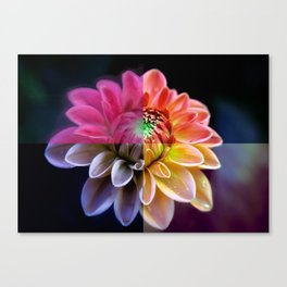 Four Piece Flower (For Peace) Canvas Print