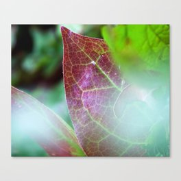 Soft Focus Fall Leaves Canvas Print