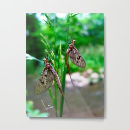May we Fly together? Metal Print