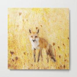 Fox in Meadow Metal Print