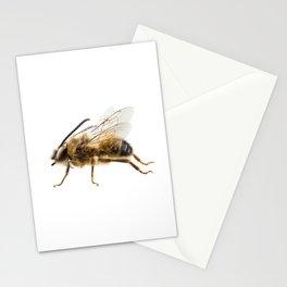 Bee species Eucera longicornis common name Solitary miner bee Stationery Cards