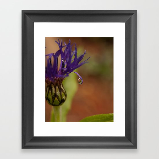 Early Morning Rain Drop Framed Art Print