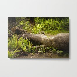 Fallen Tree on Forest Path Metal Print