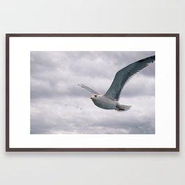 flying white seagull Framed Art Print