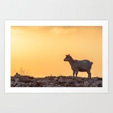 Goat baby sunset E5-5789 Art Print