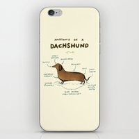 iPhone & iPod Skins featuring Anatomy of a Dachshund by Sophie Corrigan