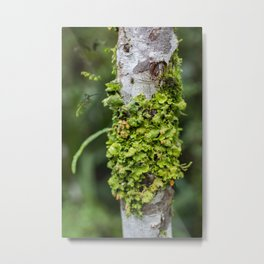 Tree with Moss Metal Print