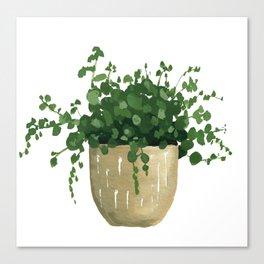 House Plant IV Canvas Print