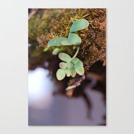Tiny World Canvas Print