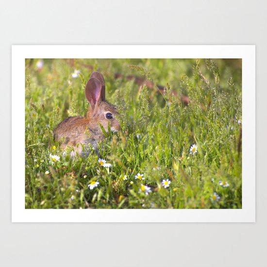 Baby spring rabbit Art Print