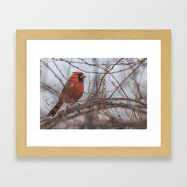Rainy day cardinal Framed Art Print
