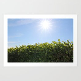 Summer Photos, Nature Photography, fine art gifts, Landscape Photo, sunshine photo Art Print