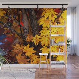 Japanese maple tree Wall Mural