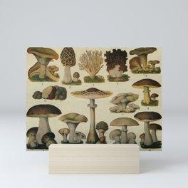 Edible Mushrooms Chart Mini Art Print