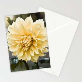 Muted Yellow Dahlia Stationery Cards