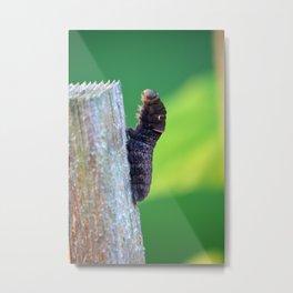 catterpillar tigerswallowtail Metal Print