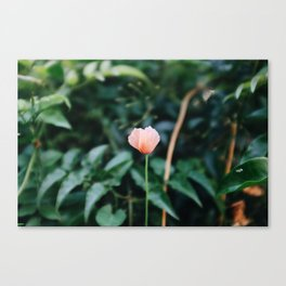 Bloom Baby Bloom Canvas Print