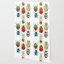 Beetle Compilation Wallpaper