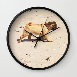 small dog pug baby playing in the summer at the beach Wall Clock