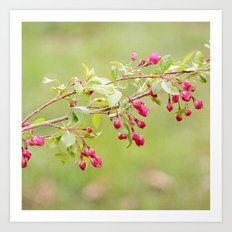 Berry Blossoms Art Print