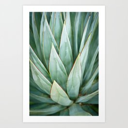 Abstract Agave Art Print