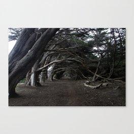 d. Canvas Print