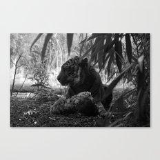 Tiger Eating Canvas Print