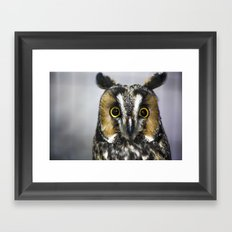 Wise Stare Framed Art Print