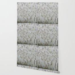 Birch Bark on a Fallen Tree Wallpaper
