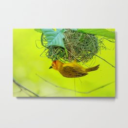 Golden Weaver Metal Print