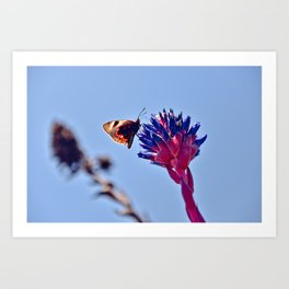 Exotic Chile Flower and Butterfly Art Print