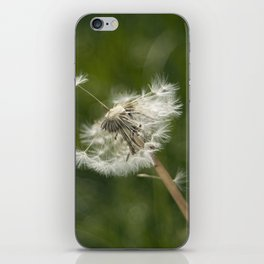 diente de león iPhone Skin