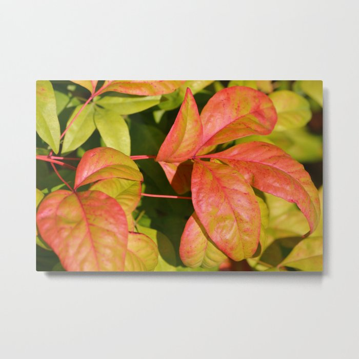 Summery Pink and Green Leaves Metal Print