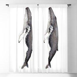 North Atlantic Humpback whale Blackout Curtain