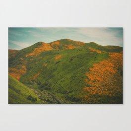 California Poppies 038 Canvas Print