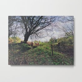 Sheep in Brecon Metal Print