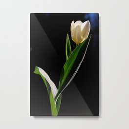 Tulipano Metal Print