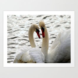 White Swans In Courtship Art Print