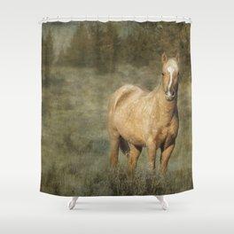 Young Palomino Bachelor Stallion Shower Curtain