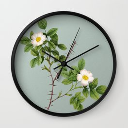 Vintage Spiny Leaved Rose of Dematra Botanical Illustration on Mint Green Wall Clock