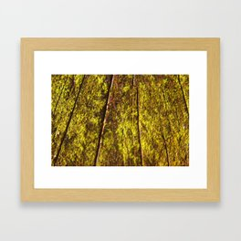 Trunk  Framed Art Print