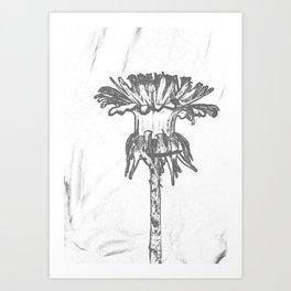 Flower Cia Art Print