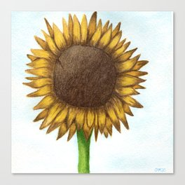 The Colored Pencil Sunflower Drawing Canvas Print