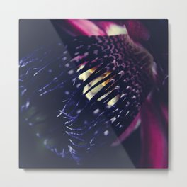 Passiflora Alata - Winged Stem Passion Flower - Ruby Star - Ouvaca Metal Print
