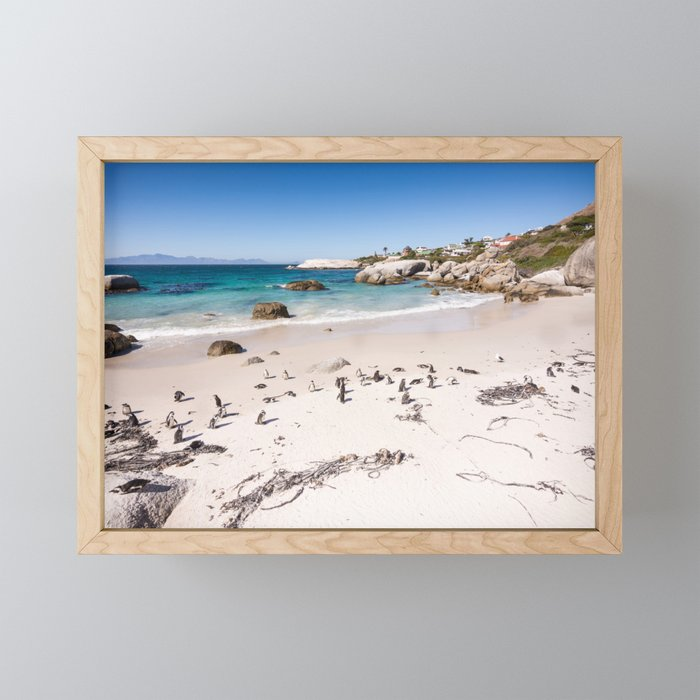 Penguins on Boulders Beach in Cape Town, South Africa Framed Mini Art Print