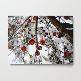 Apple Tree in Snow 2 - 2011 Metal Print
